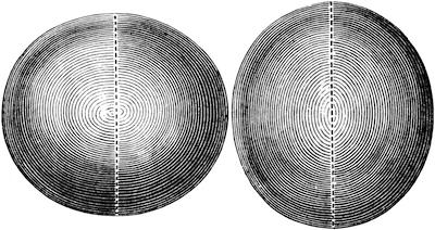 回転楕円体 扁球(左)と長球(Oblate and Prolate Spheroid)