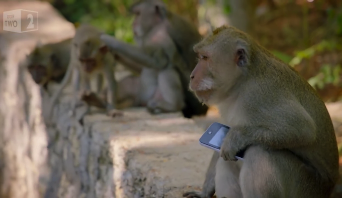 Why are these monkeys stealing from tourists?
